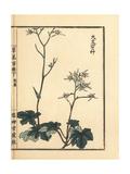 Daimonjisou or Saxifrage, Saxifraga Fortunei Var Alpina Giclee Print by Bairei Kono
