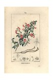 Field Restharrow, Ononis Arvensis Giclee Print by Pierre Turpin