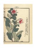 Madagascar Periwinkle, Catharanthus Roseus Giclee Print by Bairei Kono