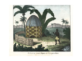 Native Thatched Hut under Palm Trees in Senegambia, West Africa Giclee Print