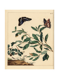 Purple Emperor Butterfly, Common Emerald, and Orchard Ermine Giclee Print by Moses Harris