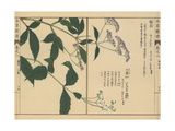 Chinese, Japanese and Sakhalin Snakeroot Giclee Print by Kan'en Iwasaki