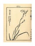White Egret Flower, Pecteilis Radiata Giclee Print by Bairei Kono