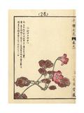 Iwakagami, Schizocodon Soldanelloides Giclee Print by Bairei Kono