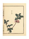 Tsutsuji or Japanese Azalea, Rhododendron Species Giclee Print by Bairei Kono