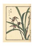 Kanran Orchid, Cymbidium Kanran Makino Giclee Print by Bairei Kono