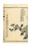 Climbing Gentian, Tripterospermum Japonicum Giclee Print by Bairei Kono