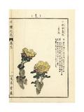 Amur Adonis, Adonis Amurensis Giclee Print by Bairei Kono