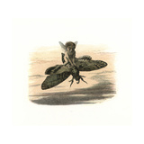 Elf Riding a Death'S-Head Hawkmoth in the Evening Giclee Print by Richard Doyle