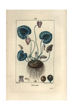 Sowbread or Cyclamen, Cyclamen Europaeum Giclee Print by Pierre Turpin