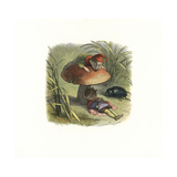 Elf King Asleep under a Toadstool, Attended by an Elf and Beetle Giclee Print by Richard Doyle