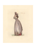 French Woman Wearing the Fashion of October 1791 Giclee Print by Auguste Etienne Guillaumot
