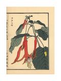 Fukusha or Fuchsia, Fuchsia Giclee Print by Bairei Kono