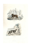 Wolf and Fox Giclee Print by Edouard Travies