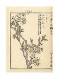 Chinese or Japanese Plum, Prunus Salicina Giclee Print by Bairei Kono