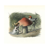 Fairy Hiding from an Elf Behind a Toadstool Giclee Print by Richard Doyle