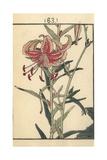 Tiger Lily, Lilium Lancifolium Giclee Print by Bairei Kono