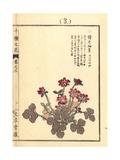 Japanese Hepatica, Anemone Hepatica Var Japonica Giclee Print by Bairei Kono