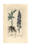 Monkshood, Aconitum Napellus Giclee Print by Pierre Turpin