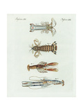 Scampi, Shrimp, Crayfish, and Mantis Shrimp Giclee Print