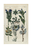 Viper's Bugloss, Bugloss, Knawel, Love in a Mist, Rattle and Broomrape Giclée-Druck