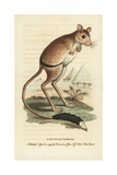 Greater Egyptian Jerboa, Jaculus Orientalis Giclee Print by George Edwards