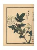 Tokin' Ibara or Roseleaf Bramble, Rubus Rosifolius Giclee Print by Bairei Kono