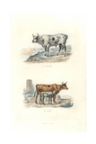 Bull, Cow and Calf Giclee Print by Edouard Travies