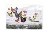 The Fairy Queen in a Carriage Drawn by Butterflies Giclee Print by Richard Doyle