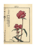China Pink, Dianthus Chinensis Giclee Print by Bairei Kono