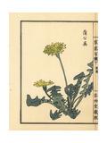 Tampopo or Dandelion, Taraxacum Japonicum Lámina giclée por Bairei Kono