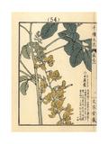 Sunn or Madras Hemp, Crotalaria Juncea L Giclee Print by Bairei Kono