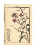 Fireweed, Chamerion Angustifolium Giclee Print by Bairei Kono