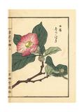 Japanese Stewartia, Stewartia Pseudocamellia Giclee Print by Bairei Kono