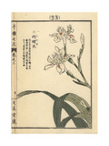 Crested Iris, Iris Japonica Giclee Print by Bairei Kono