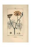 Fennel, Foeniculum Vulgare Giclee Print by Pierre Turpin