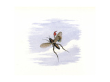 An Elf Flying Away on an Insect Giclee Print by Richard Doyle