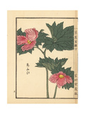 Aoi or Hollyhock, Alcea Rosea Giclee Print by Bairei Kono