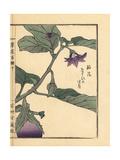 Nasu or Eggplant Flower, Solanum Melongena Giclee Print by Bairei Kono