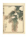 Wild Turnip, Brassica Rapa L Var Nippo-Oleifera Giclee Print by Bairei Kono