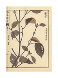 Lophanthus Sp Giclee Print by Kan'en Iwasaki