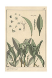 Lily of the Valley, Art Nouveau Botanical Giclee Print by Eugene Grasset