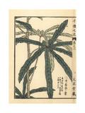Aibika Leaves, Abelmoschus Manihot Giclee Print by Bairei Kono