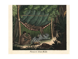 Apurina or Ipurina People of the Purus River in Brazil Giclee Print