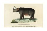 Black Rhinoceros, Diceros Bicornis Giclee Print by Thomas Pennant