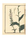 Aosagisou, Mizutombo, Habenaria Sagittifera Giclee Print by Bairei Kono