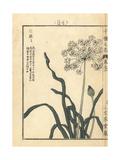 Chinese Chives, Allium Tuberosum Giclee Print by Bairei Kono