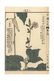 Kashiwabahaguma, Pertya Robusta Giclée-Druck von Bairei Kono