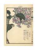 Hydrangea, Hydrangea Macrophylla Giclee Print by Bairei Kono