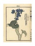 Oval-Leafed Pondweed, Monochoria Korsakowii Giclee Print by Bairei Kono